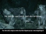 Hummm Charal (publicité), les loups (version courte)