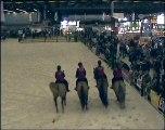 Cheval FRANCHES-MONTAGNES du Bois Naison Salon du cheval
