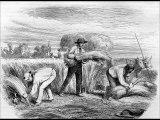 le laboureur et ses enfants-Fable de La Fontaine