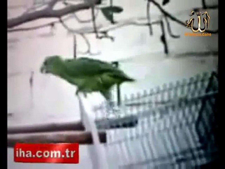 Kuran'ı Kerim okuyan papağan
