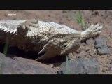 Life - L'aventure De La Vie - Reptiles Et Amphibiens 5