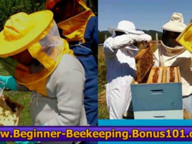 beekeeping earnings pdf guide – bookkeeping jobs from home