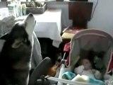 bebek bakıcısı köpek ninni söylüyor :):)