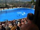 spectacle de dauphins a mundomar benidorm espana 1