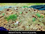 Paul Stamets : sauver le monde avec les champignons