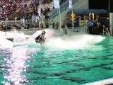 Red Bull Wake of Fame - Wakeboard & wakeskate comp