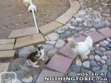 Baston de lapins les poulets interviennent