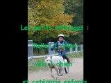 Petites catégories Roller 1 chien Vélo 1 chien et enfants