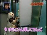 ours-attaque-phoque