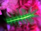 Muhteşem Renklerdeki Böcekler - Dailymotion video