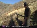Polémique : Lâcher d'un ours dans les Pyrénées