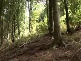 Neil Donoghue - Downhill Mountain Bike Trails