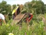 Making of the Andrew Taylor's Marin Ad (Adiridas African Safari)