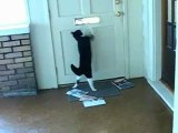 chien-chat-courrier-ram