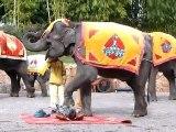 00032 Massage d'éléphant 2 Yunnan chine