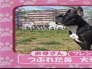 日本テレビ 志村どうぶつ園