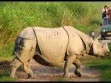 Travel To Care Heritage Assam Package Holidays Mumbai India Travel Guide