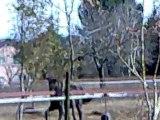 Rih avec son seau au terrain 19022011