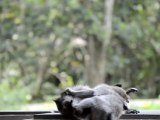 Monkeys of Ubud, Bali, Indonesia (7 of 8)