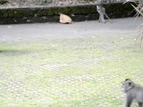 Monkeys of Ubud, Bali, Indonesia (8 of 8)
