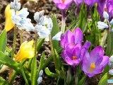 Spring vivaldi four seasons, flowers and landscape nature HD