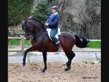 Ecuries kanel Chevaux Pure Race Espagnole A VENDRE/FOR SALE