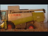 Moisson du blé  / Harvest of wheat with Lexion 600 and 460