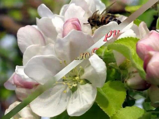 Prolet ***Spring***