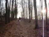 Petit galop dans la forêt