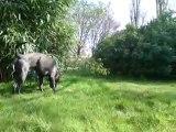 Mogwai vadrouille dans le jardin