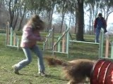 Csali, entrainement d'agility du 7 mars 2011 (2ème parcours)