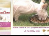 Royal Canin Sphynx video