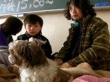 Residents and Pets Take Refuge in School in Kesennuma, Japan