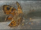 """IN FRA RED:"""" Butterfly Effect"""""""