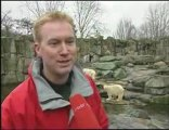 L'ours blanc Knut est mort--The polar bear Knut has died
