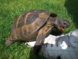 Tortue fait l'amour avec une chaussure [Turtle Lol]