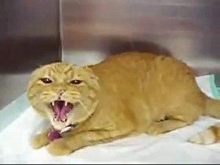 Evil Cat : Le chat incarnation du diable [Scary Cat]