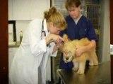 Croton Animal Hospital - Animal Hospitals in NY - Veterinarian in New York