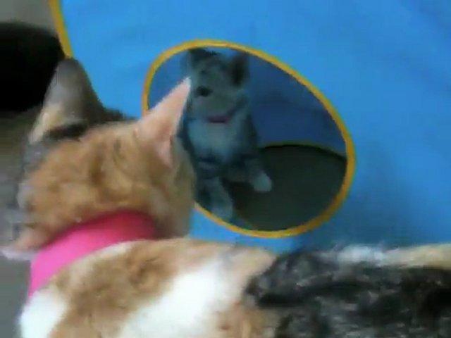 Cats, Kittens, & Rabbits