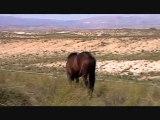 Luna, cheval andalou, andalousie, vacances authentiques en gîtes troglodytes.