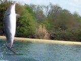 spectacle des dauphins (extraits)