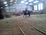 Première monte d'un jeune cheval après travail en longe