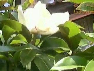 Градината на Белият делфин - част 1-ва