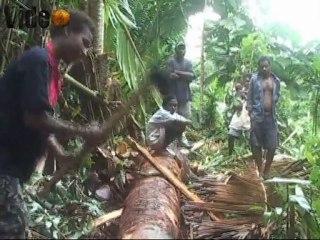 """Sing Sing und Initiationszeremonie auf dem """"migthy"""" Sepik in Papua Neu guinea"""