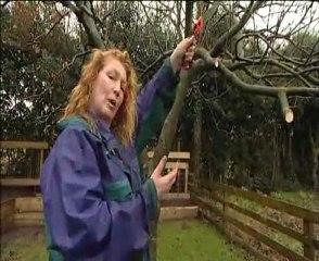 Charlie Dimmock-Pruning Trees