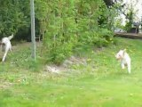 Course poursuite dans le jardin!!!