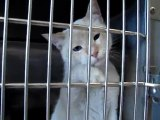 Hornell Animal Shelter #18 - cats licking, reaching