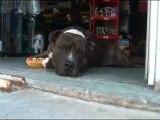 Marche aux pieds teckel jack russel education canine 13 et 83 à domicile EDUCATEUR COMPORTEMENTALISTE CANIN
