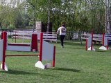 Taïga, Epagneul breton, agility, jumping, concours montigny 10/04/11