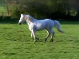 Un cheval libre est un cheval heureux...